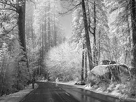 Yosemite-537-richberrett.jpg