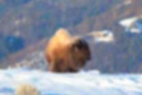 Yellowstone-148-richberrett.jpg