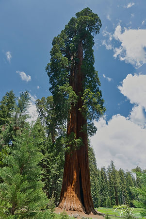 Sequoia-110-richberrett_Luminar2018-edit