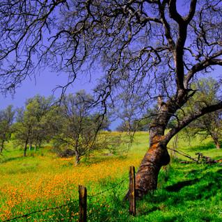Spring in the Sierra Foothills