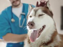 Vómitos y diarreas en perros.