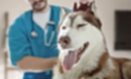 En el veterinario