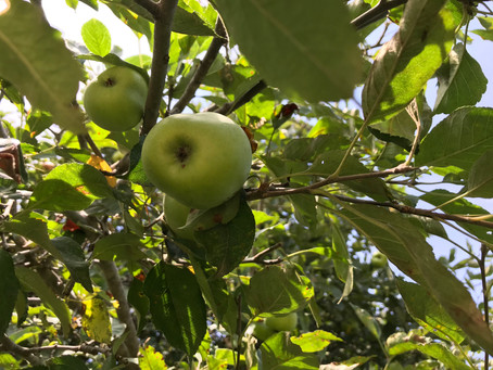 6 Fun Ways to Celebrate Johnny Appleseed Day!