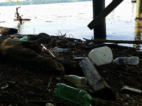 Potomac River Shoreline Cleanup Resources