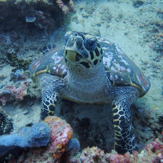 Dive the Gili islands.jpg
