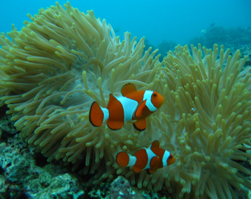 Best Reefs in at South Coast Lombok