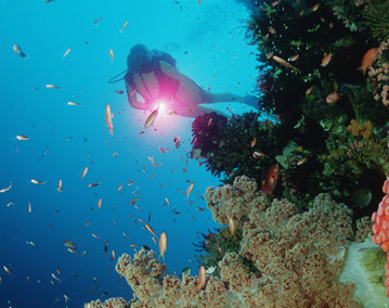 Lombok South Coast Dive
