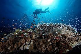 Dive Lombok