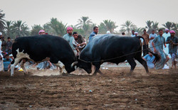 Mundhir Hamed Alharthi, 20 god., Oman.jpg