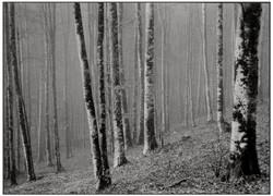 Ettore Perazzetta_Ultime foglie.jpg