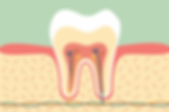 tooth-anatomy-1-945x623.png