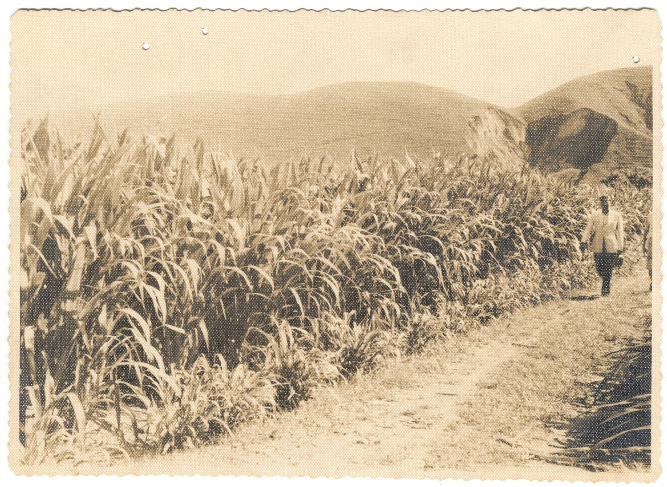 foto054-capim guatemala