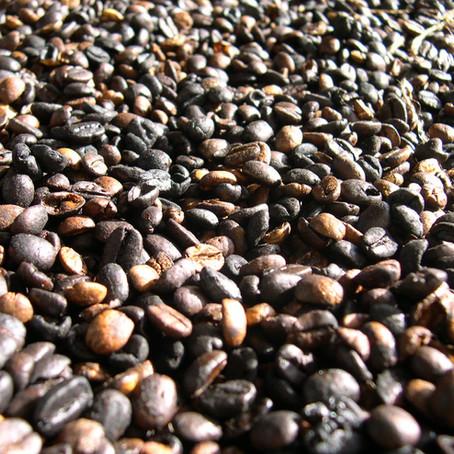 Os números da produção de café no Rio de Janeiro