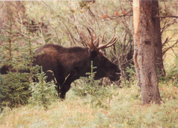 NYDEC 2020 Hunting Calendar