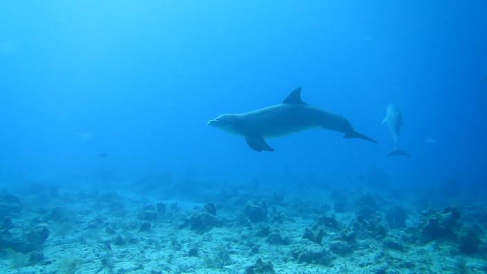 Dolphins underwater!!  March 21st, 2018