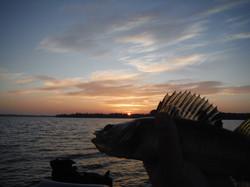 Walleye Sunset 2020