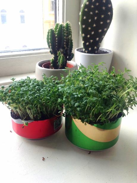 Grønn vekst i brusboksen din