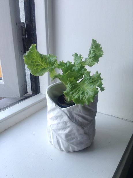 Du må slutte å kaste salaten!