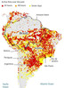 Her er hva vi kan gjøre for å redusere skogbrann i Amazonas!