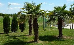 Bosco-Parco2 (1).jpg