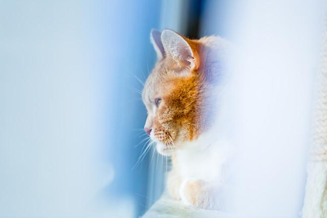 Katzenfotografin