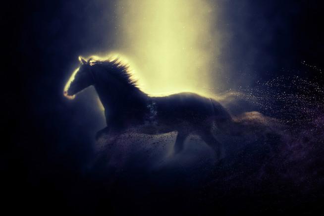 Künsterlisches Pferdeportrait