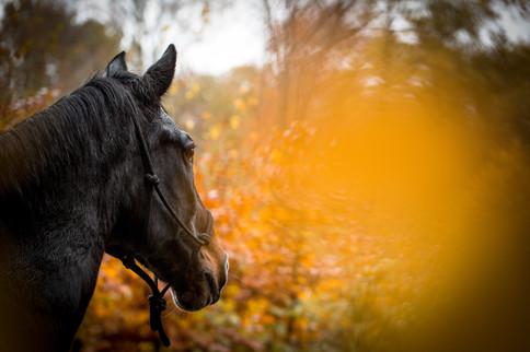 Pferdeshooting im Wald