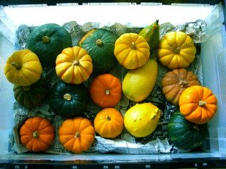 かぼちゃと松岡1.jpg