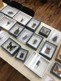 昆虫1.jpg