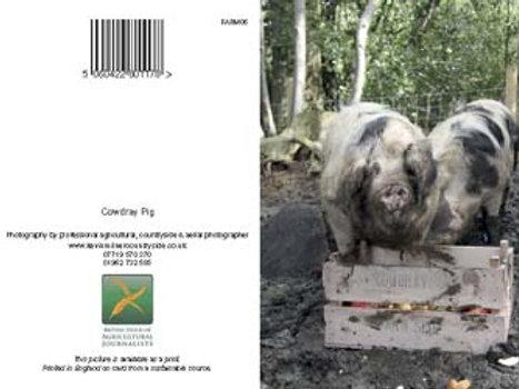 Cowdray Pig