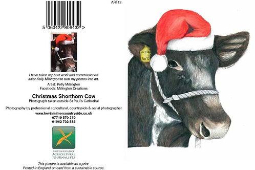Christmas Shorthorn Cow