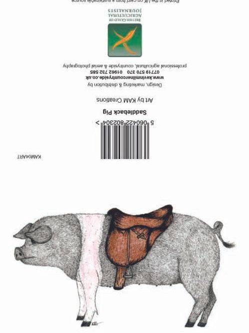 Saddleback Pig art