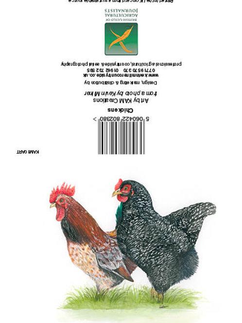 Chickens Art