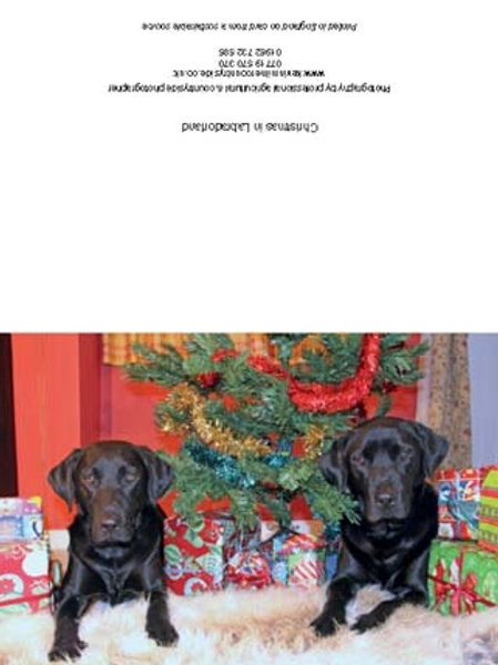 Christmas in Labradorland