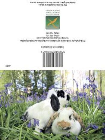Rabbits in Blusebel