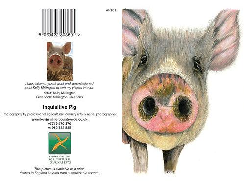 Inquisitive Pig Art