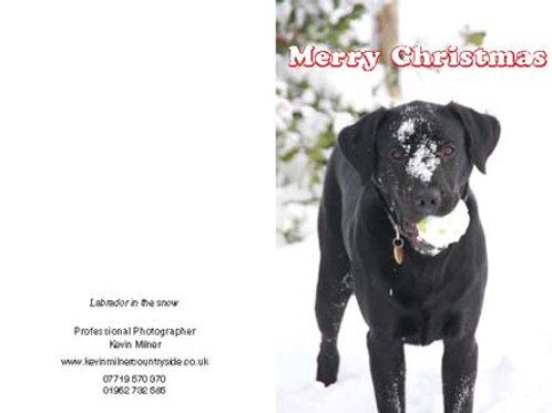 Labrador in the Snow