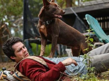 Crítica: 'Amor e Monstros', da Netflix, é filme divertido e despretensioso