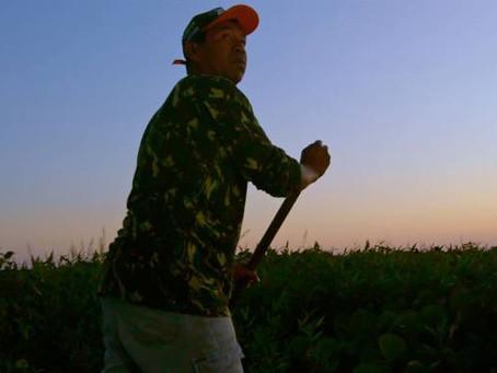 Crítica: 'Pantanal: A Boa Inocência de Nossas Origens' é ode ao povo pantaneiro