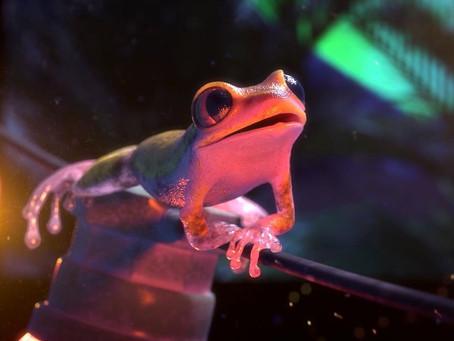 Qual curta-metragem de animação deve ganhar o Oscar em 2018?
