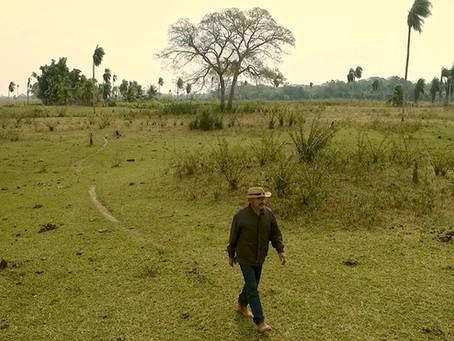 Crítica: 'Ruivaldo' alerta para deterioração do Pantanal