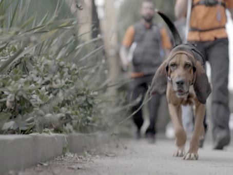Crítica: 'Radar Pet' é programa informativo e emocionante
