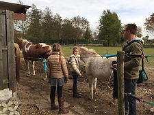 paardrijles kinderen, leren paardrijden, aanbod paardrijles, natural horsemanship lessen, natural horsemanship cursus gelderland