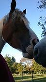 paardenfluisteraar, natural horsemanship gelderland, paardrijschool gelderland