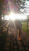 natural horsemanship, wat is natural horsemanship, natural horsemanship lessen, natural horsemanship cursus, paardenfluisteraar, natural horsemanship gelderland
