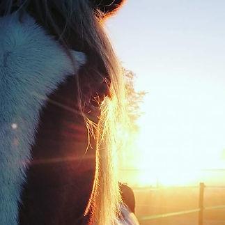 natural horsemanship gelderland, kosten paardrijles, kosten paardrijles kinderen, leren paardrijden gelderland
