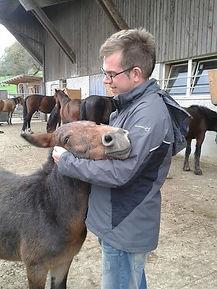 leren omgaan met paarden, cursus band opbouwen met je paard, natural horsemanship cursus gelderland, natural horsemanhip lessen