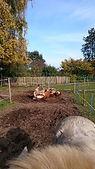 natural horsemanship oefeningen, natural horsemanship cursus gelderland, natural horsemanship lessen, paardrijlessen