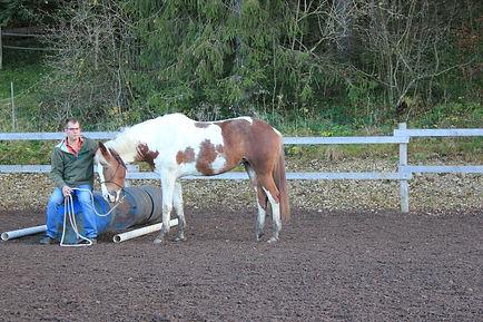 steigerend paard, moeilijk paard, bokkend paard, schoppend paard, bijtend paard