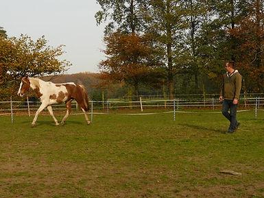 rechtrichten paard, moeilijk paard, natural horsemanship, natural horsemanship cursus gelderland, natural horsemanship lessen gelderland